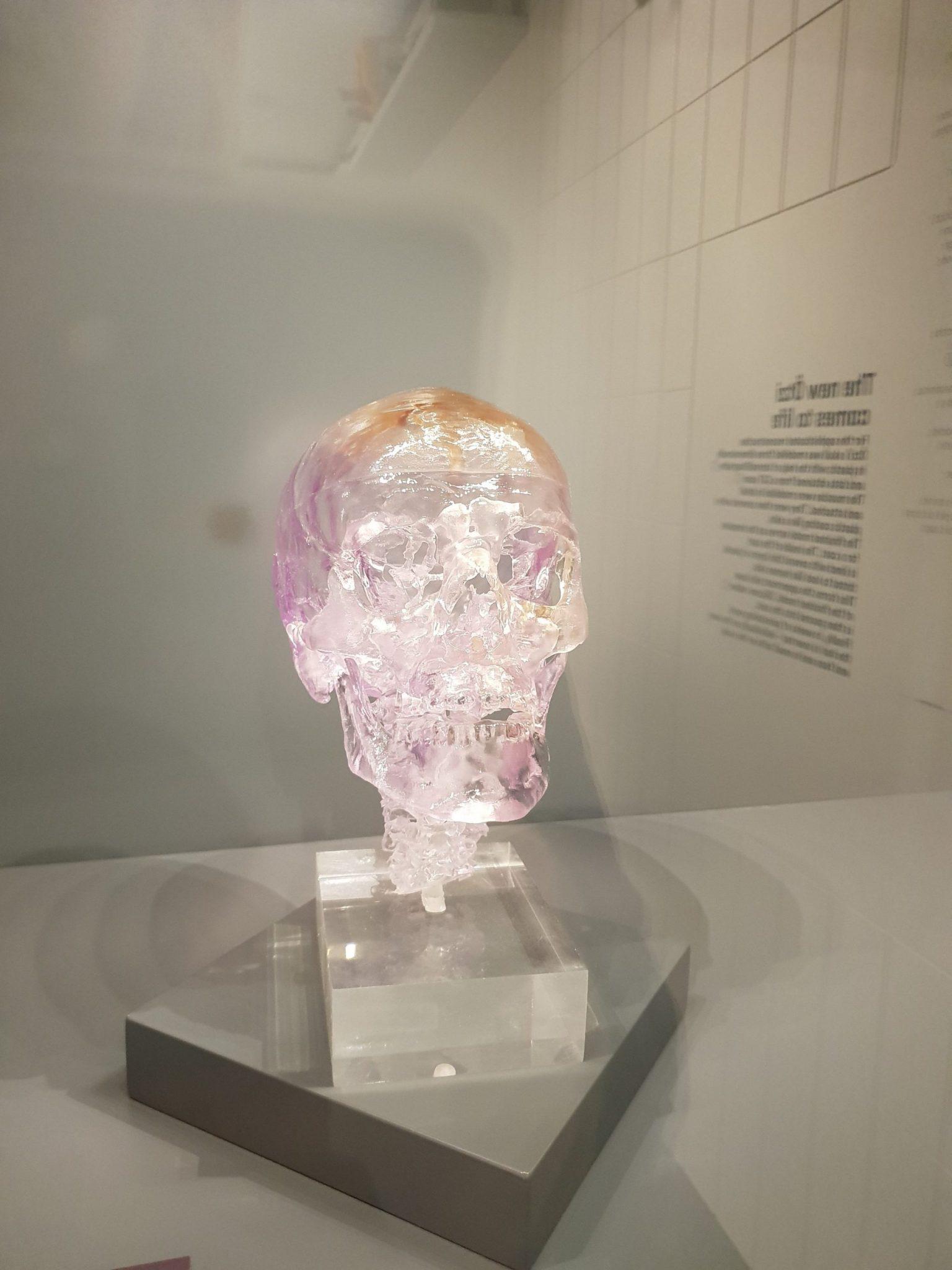 Ӧtzi: model czaszki