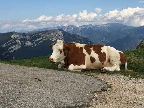 Jezioro Garda - region Lessina